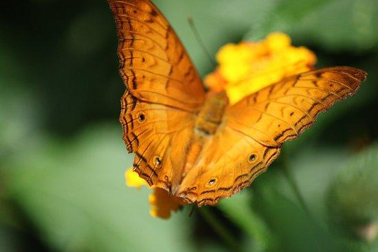 Jardin des Papillons Φωτογραφία