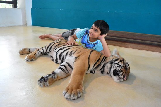 Tiger Park Pattaya: I am sleepy too