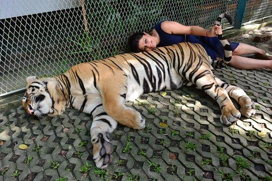 Tiger Park Pattaya: You too can pose!!!