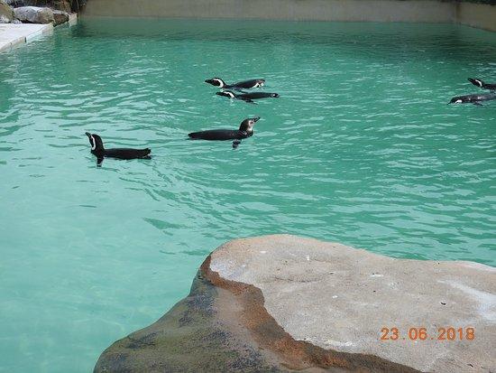 Blackpool Zoo: penguines