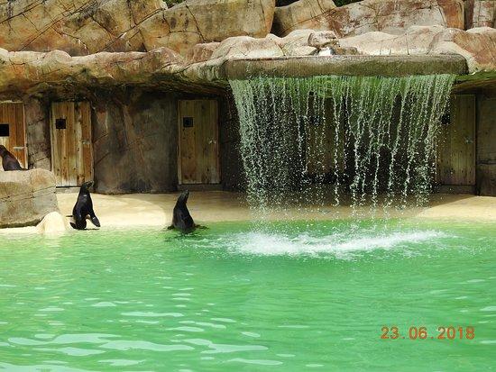 Blackpool Zoo: sealions