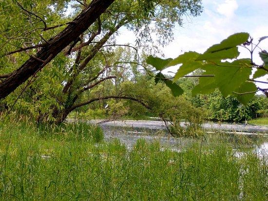 Woodbury, MN: FOTO_20180620_162938_large.jpg