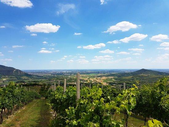 Arqua Petrarca, Italia: Azienda Agricola Vignalta s.s.