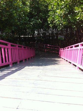 Pandansari Mangrove Forest: Dalam ke Hutan