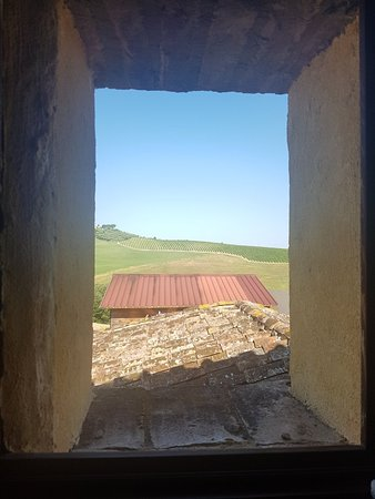 Podere Canapaccia: 20180616_084949_large.jpg