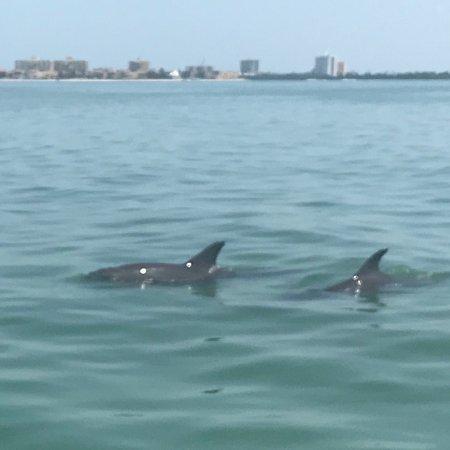 Фотография Clearwater Marine Aquarium