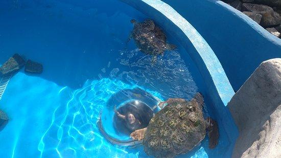 Projeto Tamar Vitória: Adult turtles and me