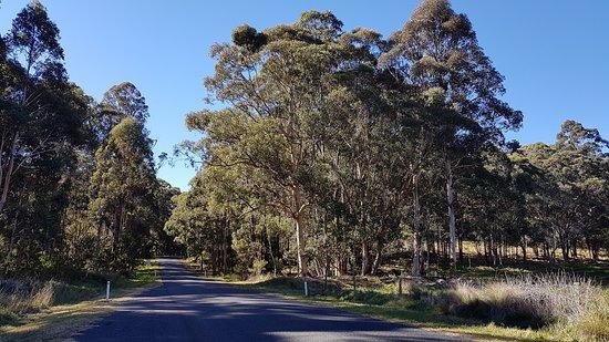 Killarney, Австралия: Example of the beautiful views along Falls Drive