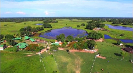 Bundesstaat Mato Grosso do Sul: Southern Pantanal