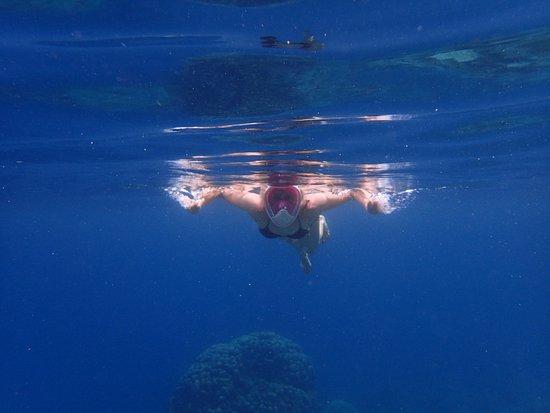 Joy's Adventure Excursion and Coastal Cruise – fénykép