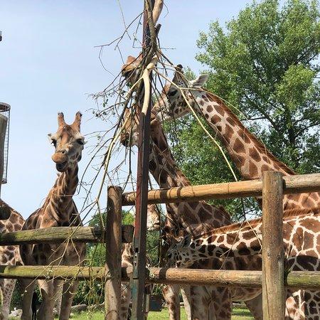 Фотография Chester Zoo