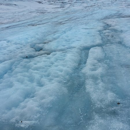 Фотография Exit Glacier Guides - Day Tours