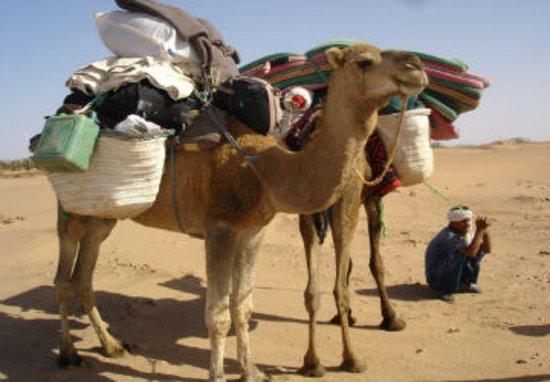 Marrakech Desert Tours: Marrakech Desert