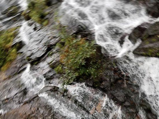 Amicalola Falls State Park: 20171013_110145_large.jpg