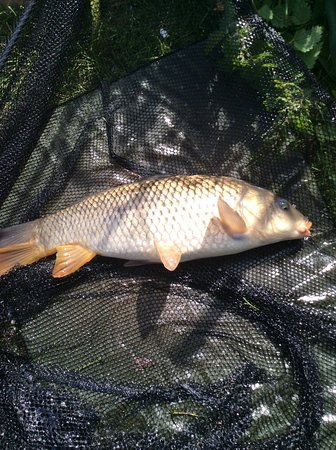 Trelawne Manor Holiday Park: Carp caught in the lake