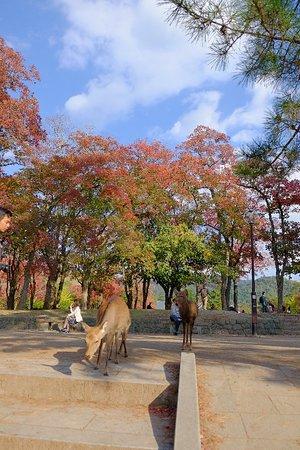 Парк Нара: Nara Park