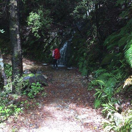 Kahurangi National Park, Νέα Ζηλανδία: photo6.jpg
