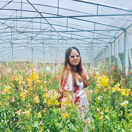 Benguet Province, Philippines: 10 photos aren't enough to sum-up this blooming wonder called Northern Blossom Flower Farm. Ever