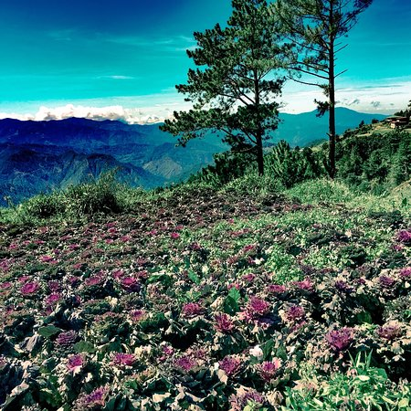 Benguet Province, Philippines: Northern Blossom Flower Farm
