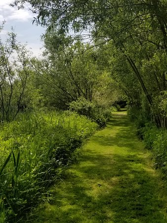 Renishaw Hall And Gardens: Path on the lakeside stroll at Renishaw Hall