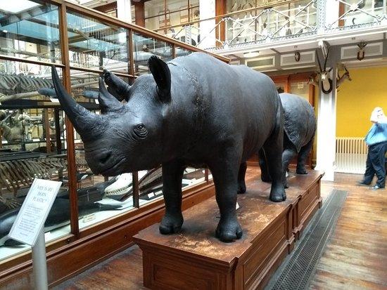 Bilde fra National Museum of Ireland - Naturhistorie