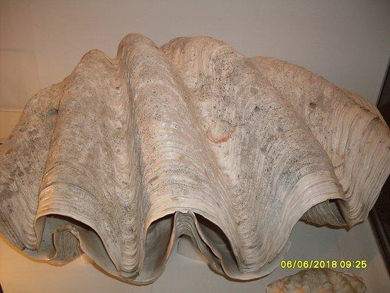 Natural History Museum of Kopavogur: large shell