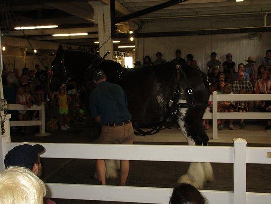 Kentucky Horse Park: Draft horse demonstration