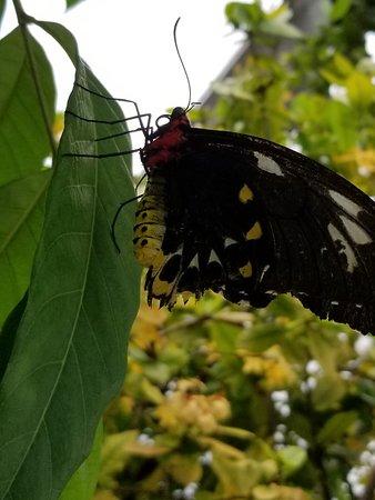 Bilde fra Butterfly World
