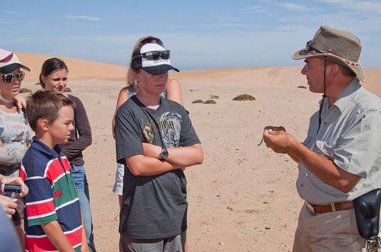 Namib-Wüsten-Allradtour ab Swakopmund