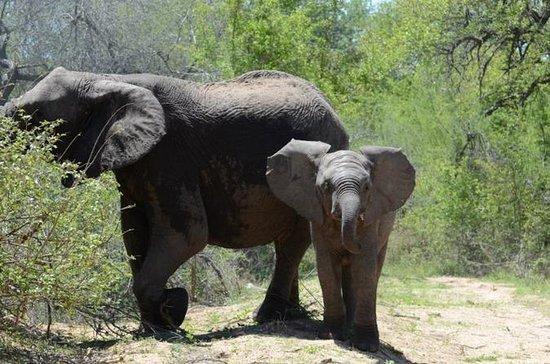 Parc national Kruger de 4 jours