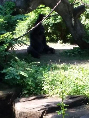 Zdjęcie Skip the Line: Cincinnati Zoo and Botanical Garden Admission Ticket