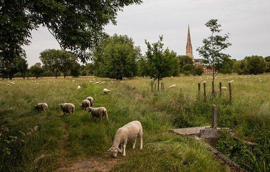 Harnham Water Meadows: View
