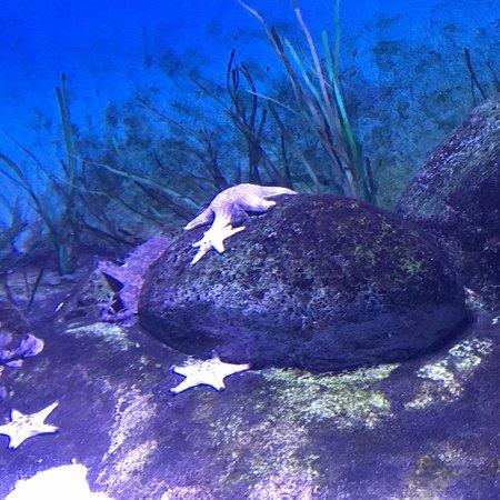 S.E.A. Aquarium – fénykép
