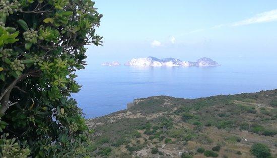 Il Gabbiano B&B: Vista dell'Isola Palmarola dalla Struttura