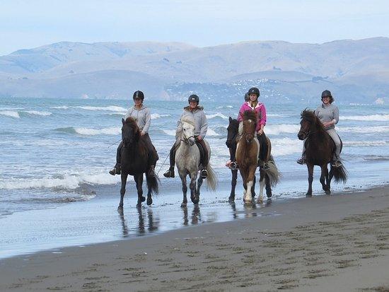 Christchurch Icelandic Horse Treks