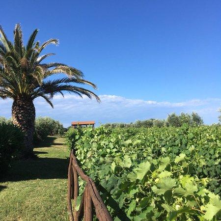 Bilde fra Agriturismo La Cipriana