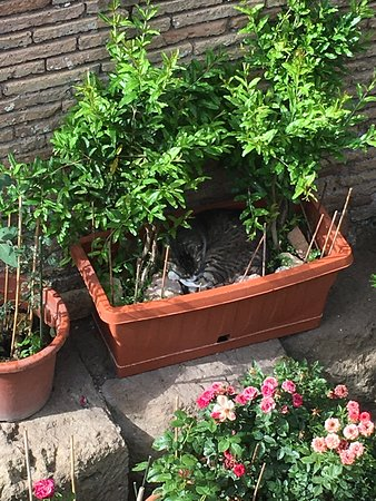 Torre Argentina Cat Sanctuary: Cat hiding in a planter