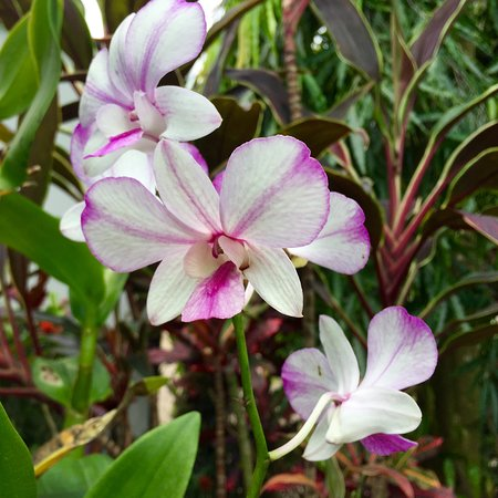 National Orchid Garden: Orchid