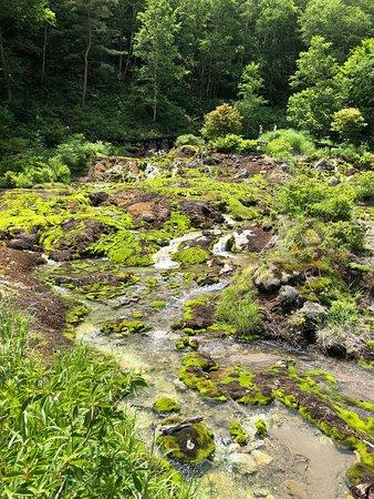 Chatsubomigoke: チャツボミゴケ群生地