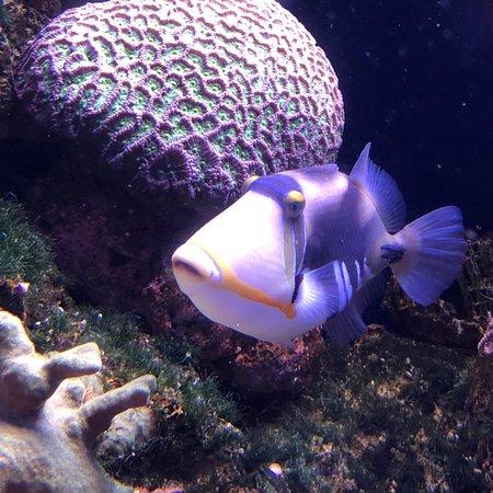 Palma Aquarium صورة فوتوغرافية