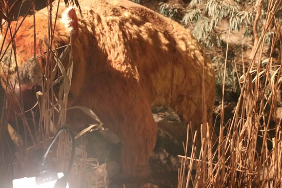 Naracoorte Caves National Park: Still in the Visitors Centre