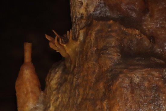 Naracoorte Caves National Park: More exploring