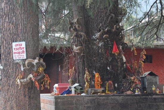 Ghatotkach Tree Templ
