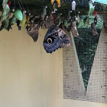 The Butterfly Farm – fénykép