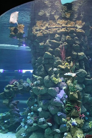 Poema del Mar: Coral reef cylinder tank