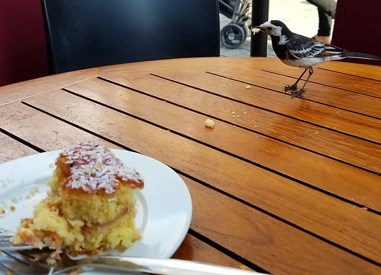 McCambridge's of Galway: Sharing a snack with a feathered friend