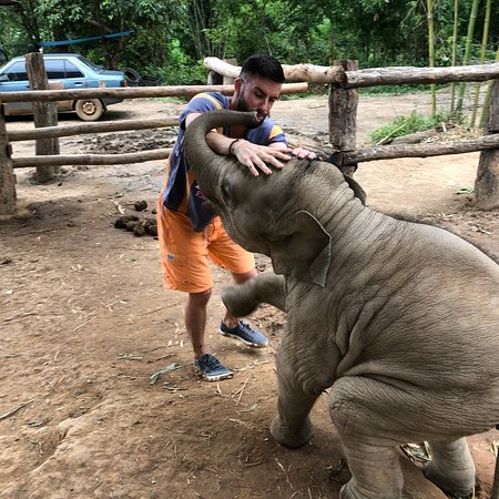 Bilde fra Blue Daily Elephant Care