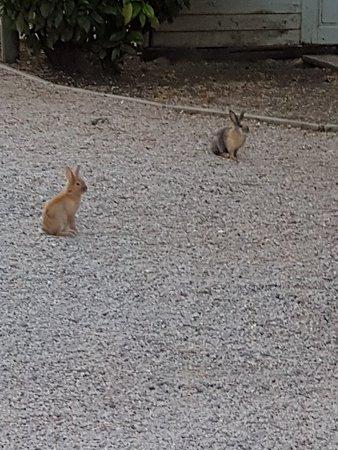 Pizzeria Magic Country: Una calda atmosfera allietata  da  simpatici coniglietti