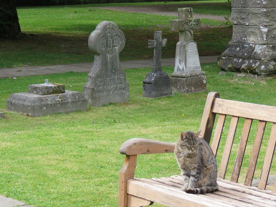 Dunkeld Cathedral: If you see this cat please pet it
