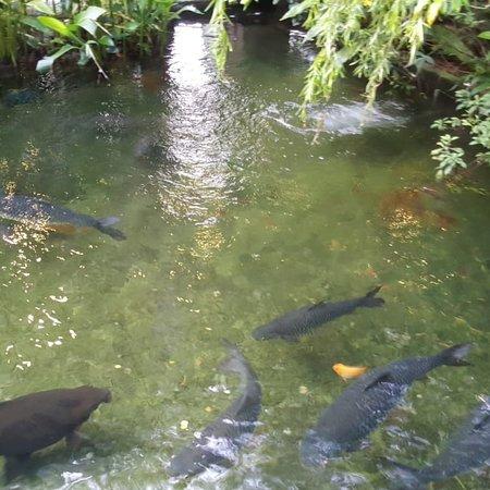 Singapore Zoo: Pics taken around Zoo